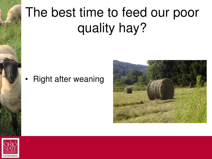 The best time to feed our poor quality hay?