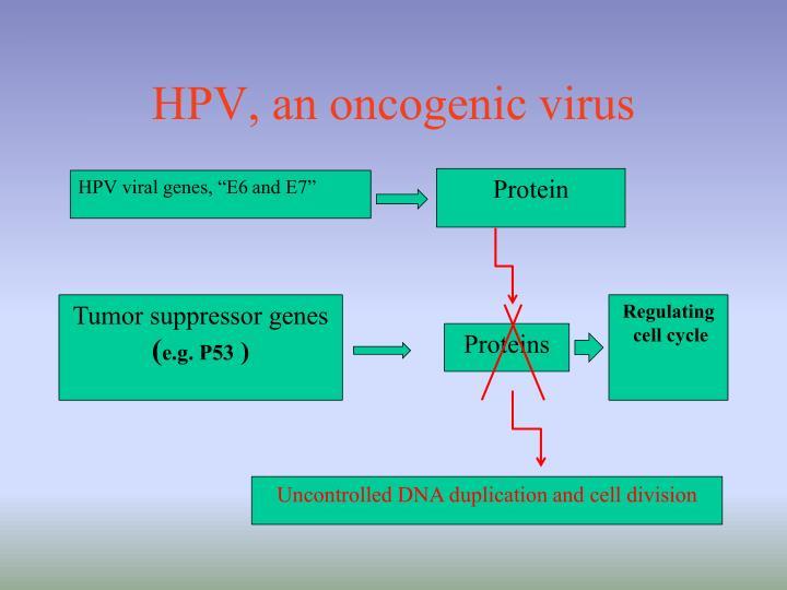 HPV, an oncogenic virus