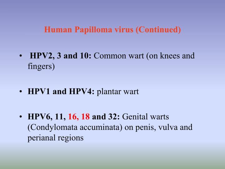 Human Papilloma virus (Continued)