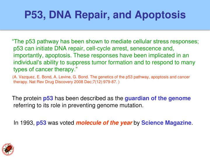 P53, DNA Repair, and Apoptosis