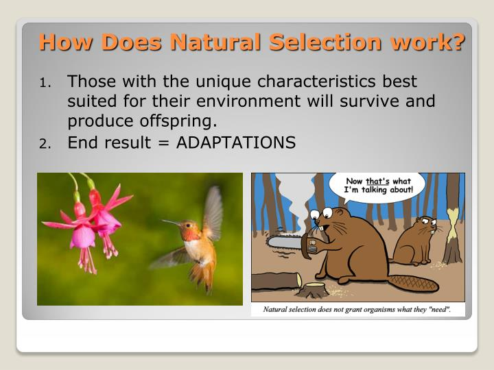 How Does Natural Selection work?