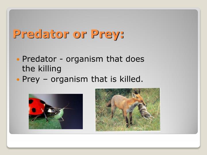 Predator or Prey: