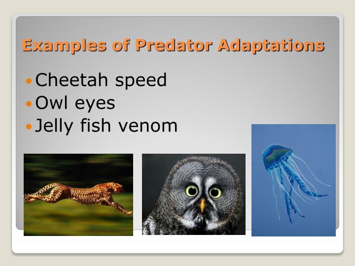 Examples of Predator Adaptations