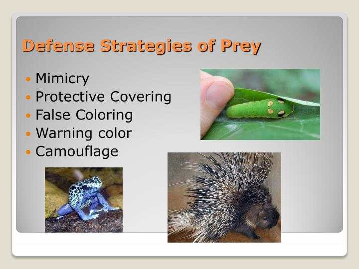 Defense Strategies of Prey