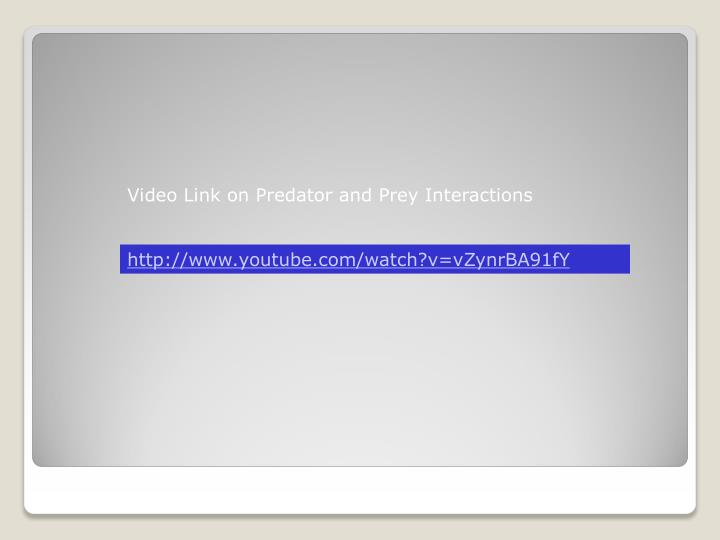 Video Link on Predator and Prey Interactions