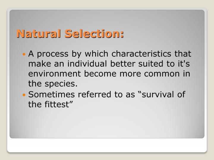 Natural Selection: