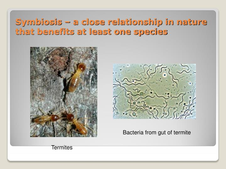 Symbiosis – a close relationship in nature that benefits at least one species