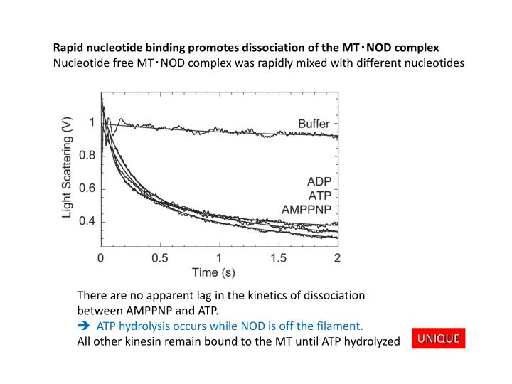 Rapid nucleotide binding promotes dissociation of the MT‧NOD complex