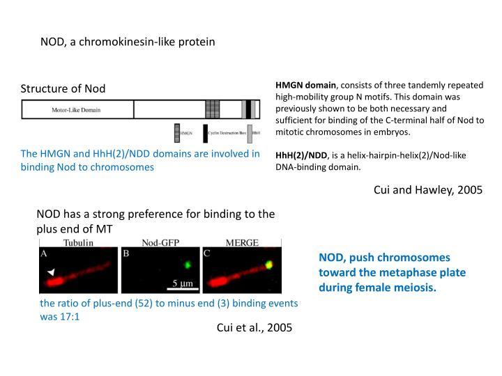 NOD, a chromokinesin-like protein