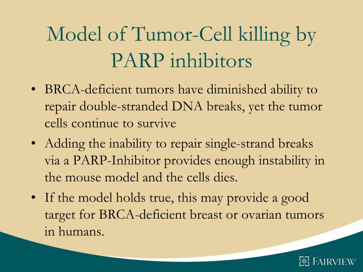 Model of Tumor-Cell killing by PARP inhibitors