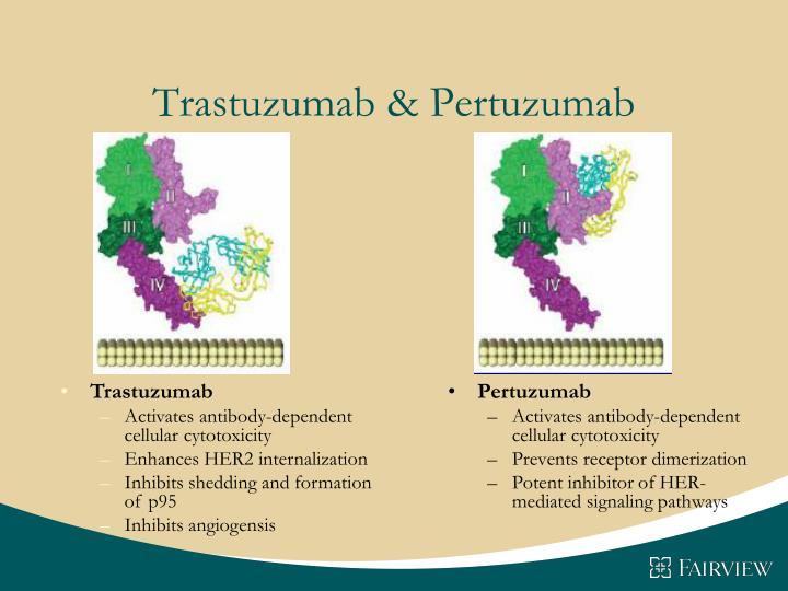 Trastuzumab & Pertuzumab