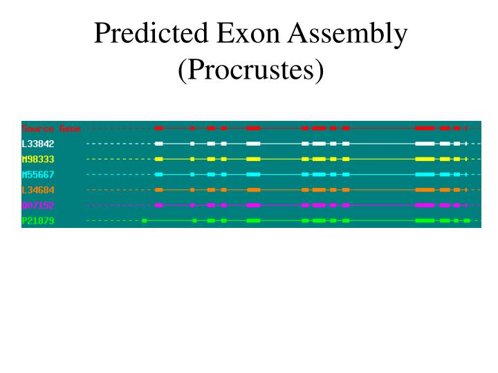 Predicted Exon Assembly