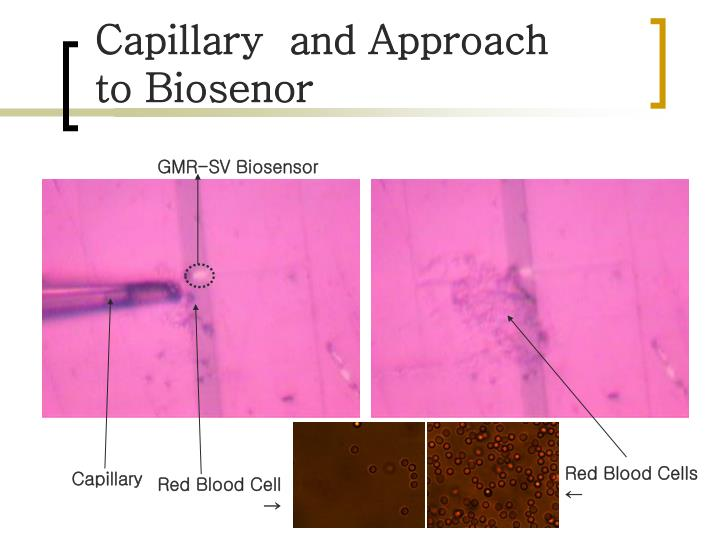 Capillary  and Approach to Biosenor