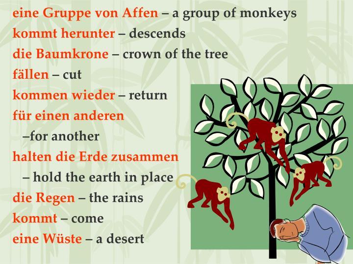 eine Gruppe von Affen