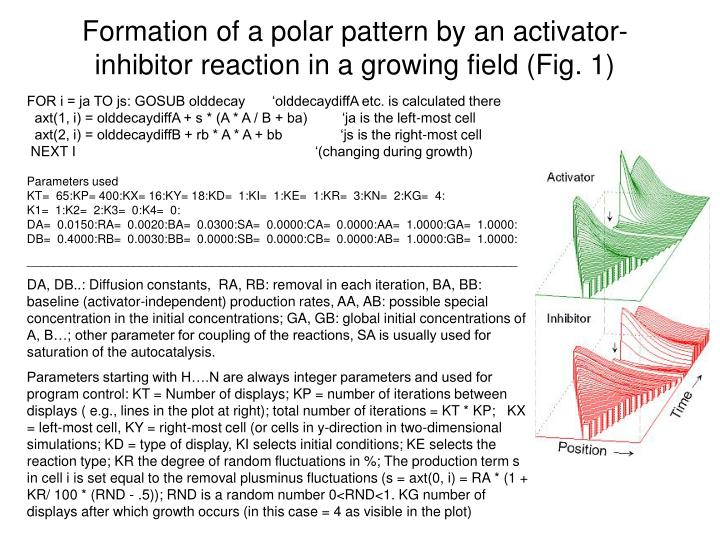 Formation of a polar pattern by an activator-inhibitor reaction in a growing field (Fig. 1)