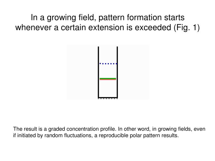 In a growing field, pattern formation starts whenever a certain extension is exceeded (Fig. 1)