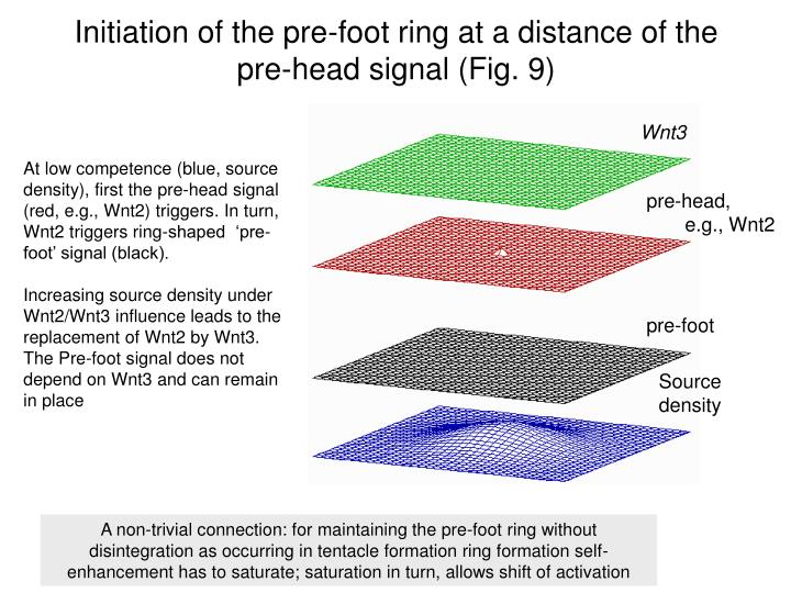 Initiation of the pre-foot ring at a distance of the pre-head signal (Fig. 9)