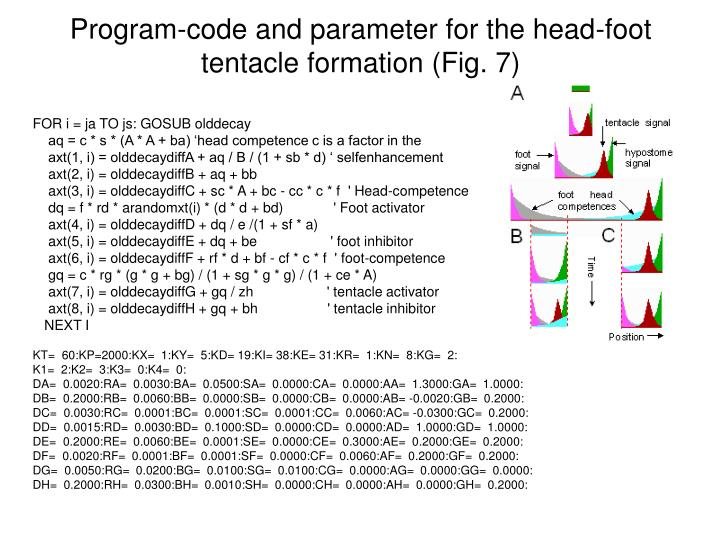 Program-code and parameter for the head-foot tentacle formation (Fig. 7)