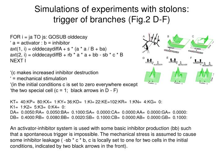 Simulations of experiments with stolons:
