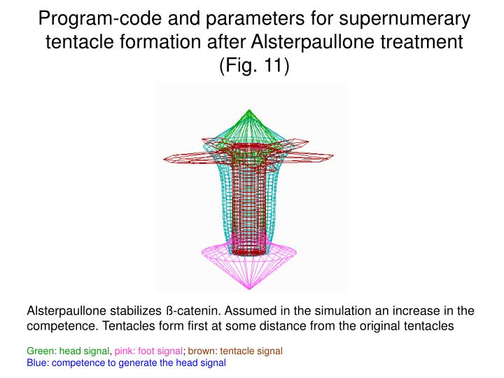 Program-code and parameters for supernumerary tentacle formation after Alsterpaullone treatment (Fig. 11)