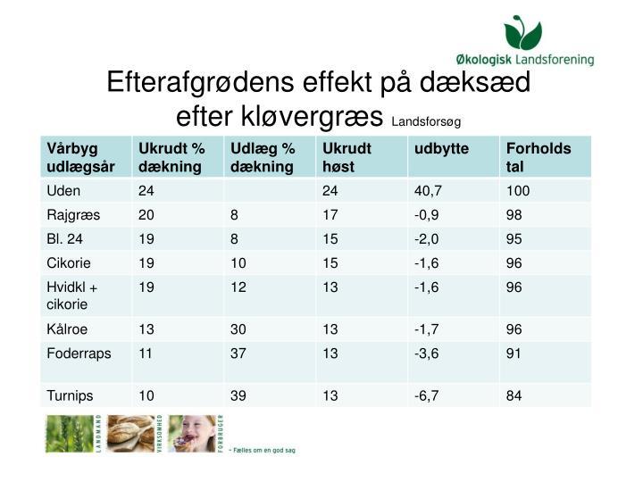 Efterafgrødens effekt på dæksæd