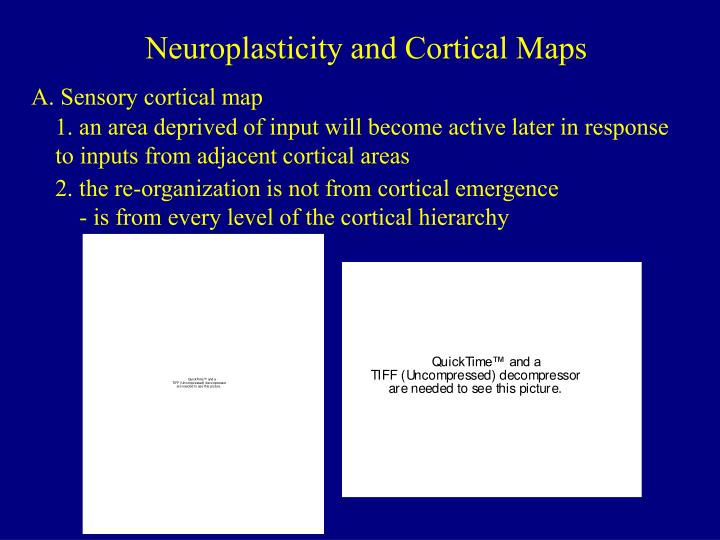 Neuroplasticity and Cortical Maps