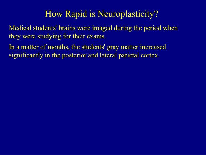 How Rapid is Neuroplasticity?