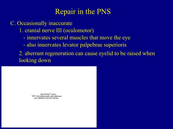 Repair in the PNS