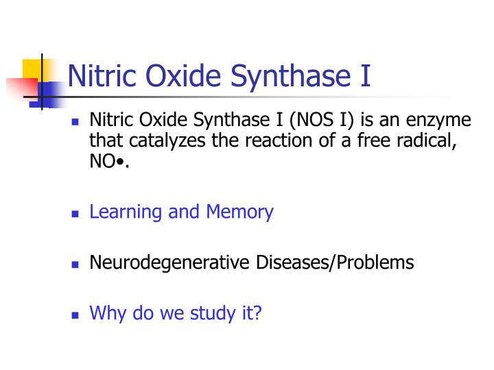 Nitric Oxide Synthase I