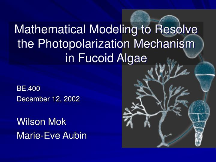 Mathematical Modeling to Resolve the Photopolarization Mechanism in Fucoid Algae