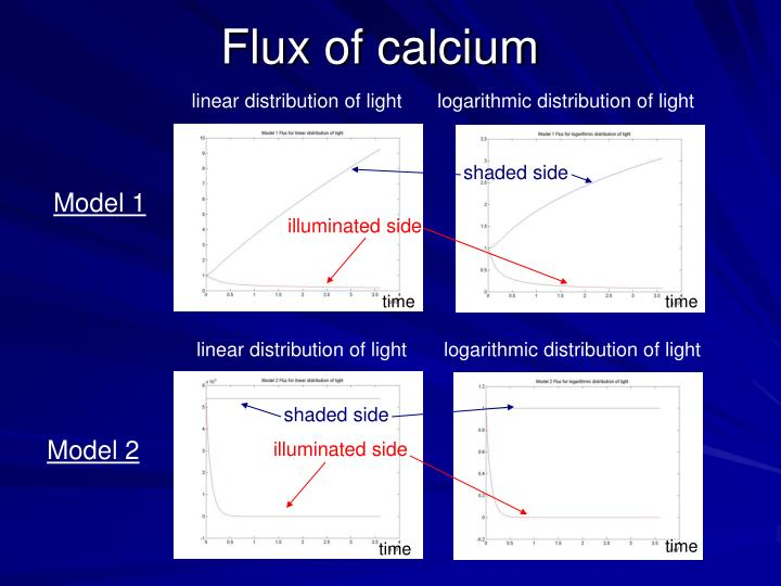Flux of calcium