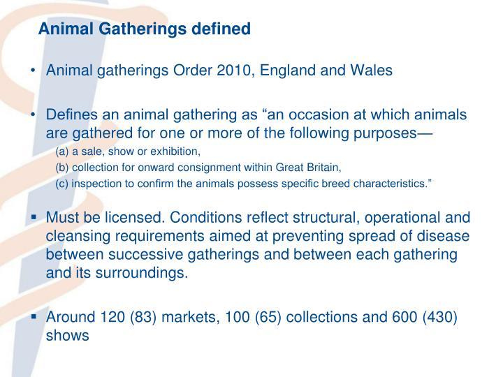 Animal Gatherings defined