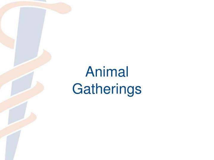 Animal Gatherings