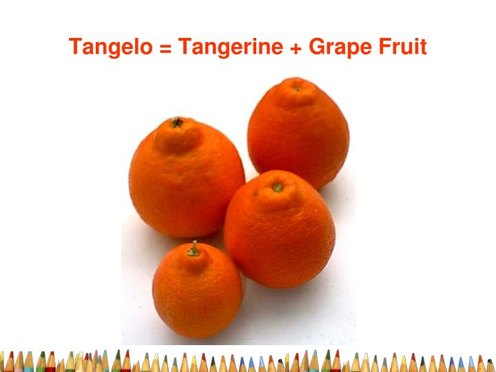 Tangelo = Tangerine + Grape Fruit