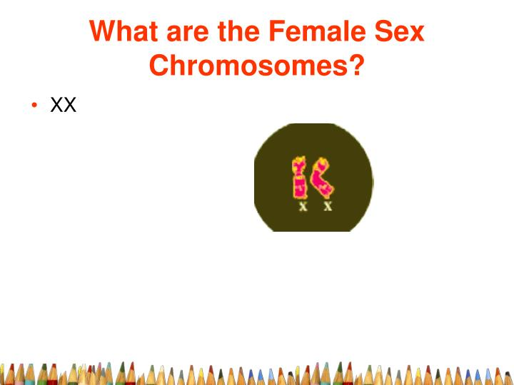 What are the Female Sex Chromosomes?