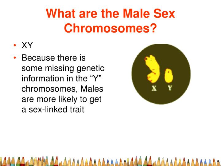 What are the Male Sex Chromosomes?
