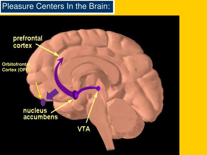 Pleasure Centers In the Brain: