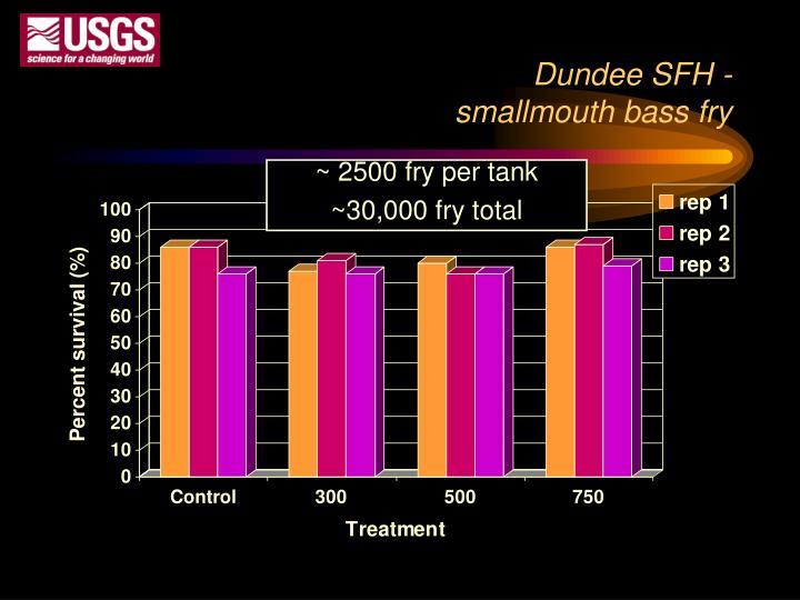 Dundee SFH -
