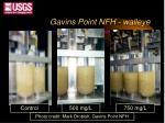 gavins point nfh walleye1