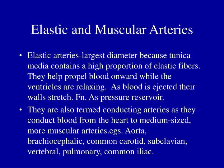 Elastic and Muscular Arteries