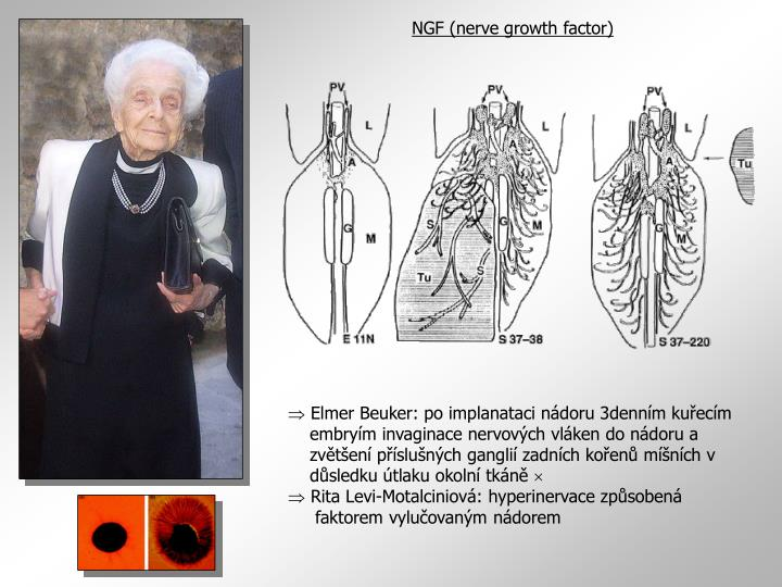NGF (nerve growth factor)