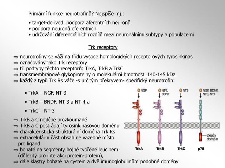 Primární funkce neurotrofinů? Nejspíše mj.: