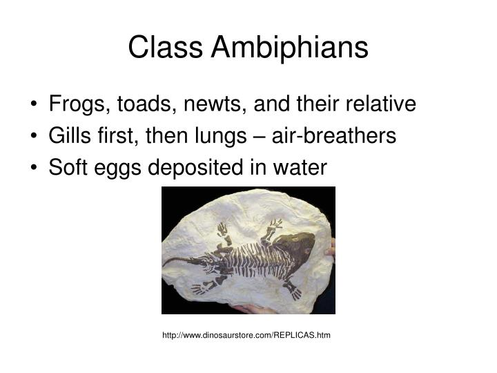 Class Ambiphians
