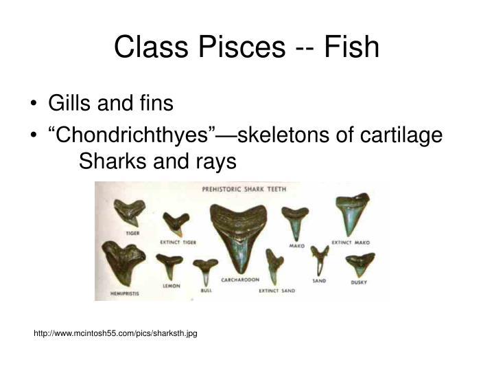 Class Pisces -- Fish