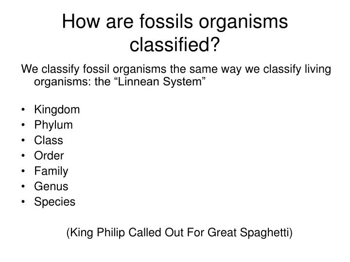 How are fossils organisms classified?