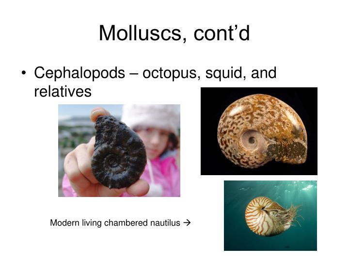 Molluscs, cont'd