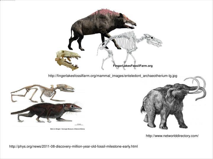 http://fingerlakesfossilfarm.org/mammal_images/enteledont_archaeotherium-lg.jpg