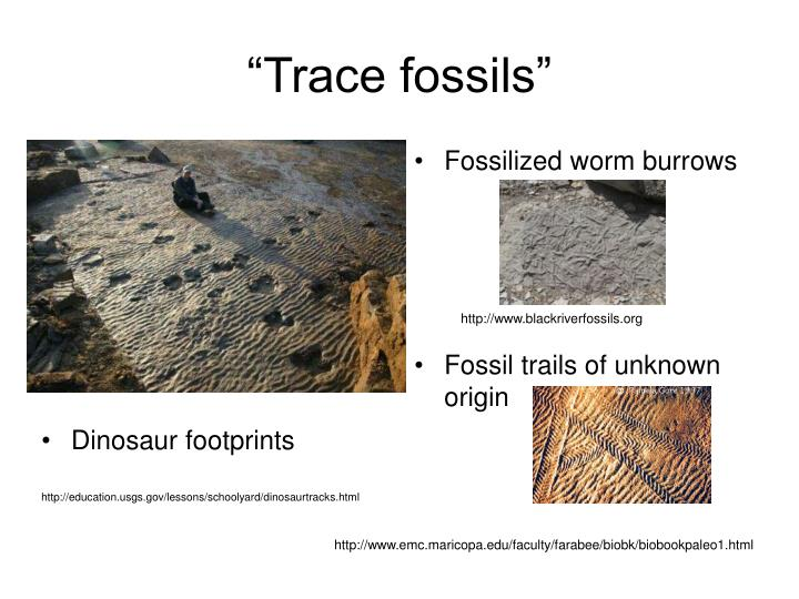 """""""Trace fossils"""""""