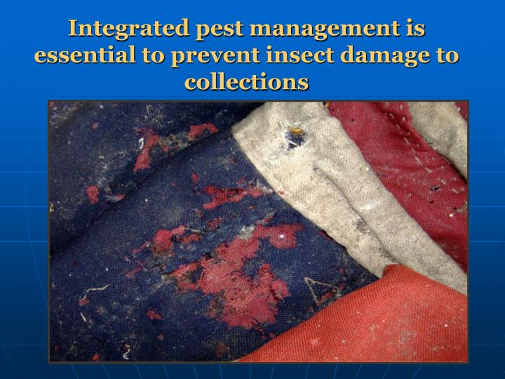 Integrated pest management is essential to prevent insect damage to collections