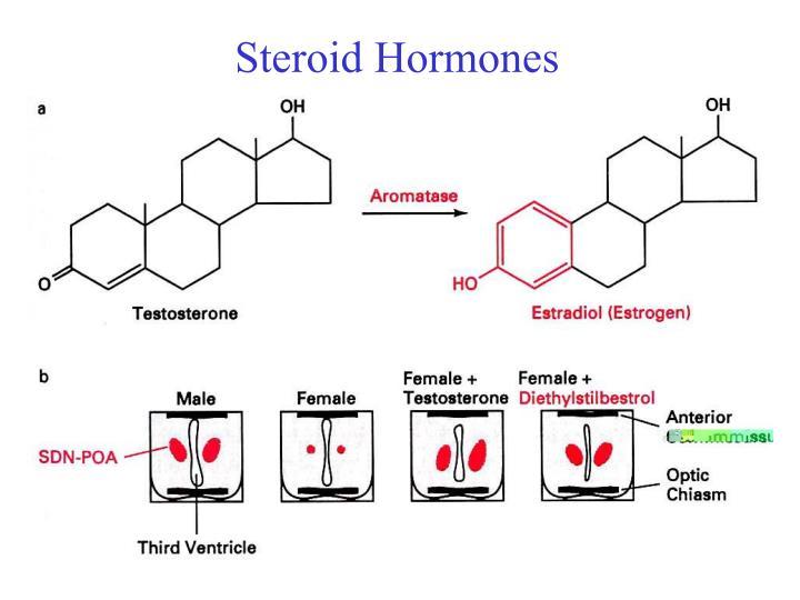 Steroid Hormones
